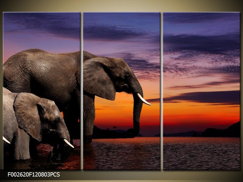 Obraz do bytu sloni