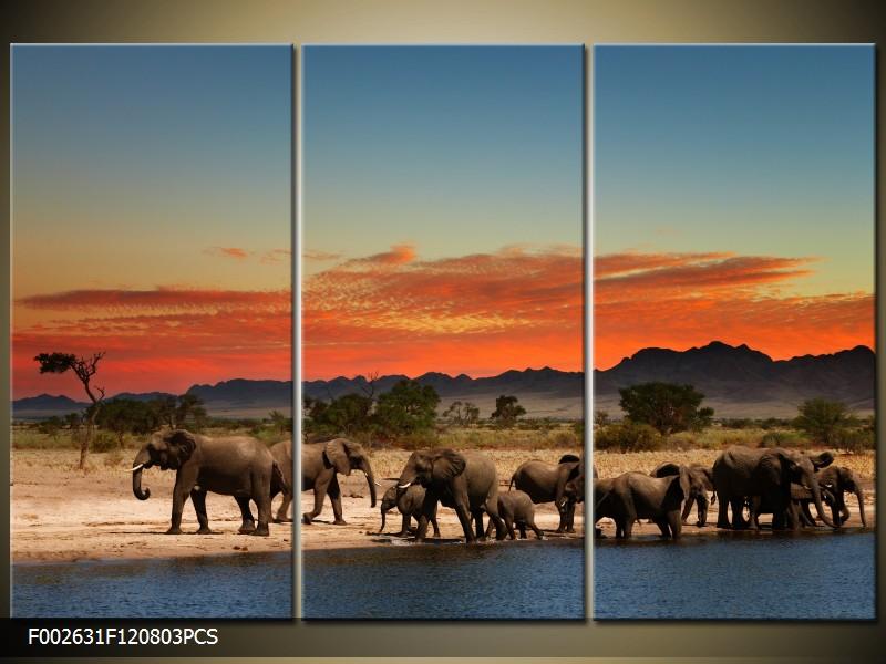 Obraz do bytu sloni v Africe
