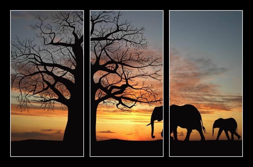 Obraz na zeď krajina se slony
