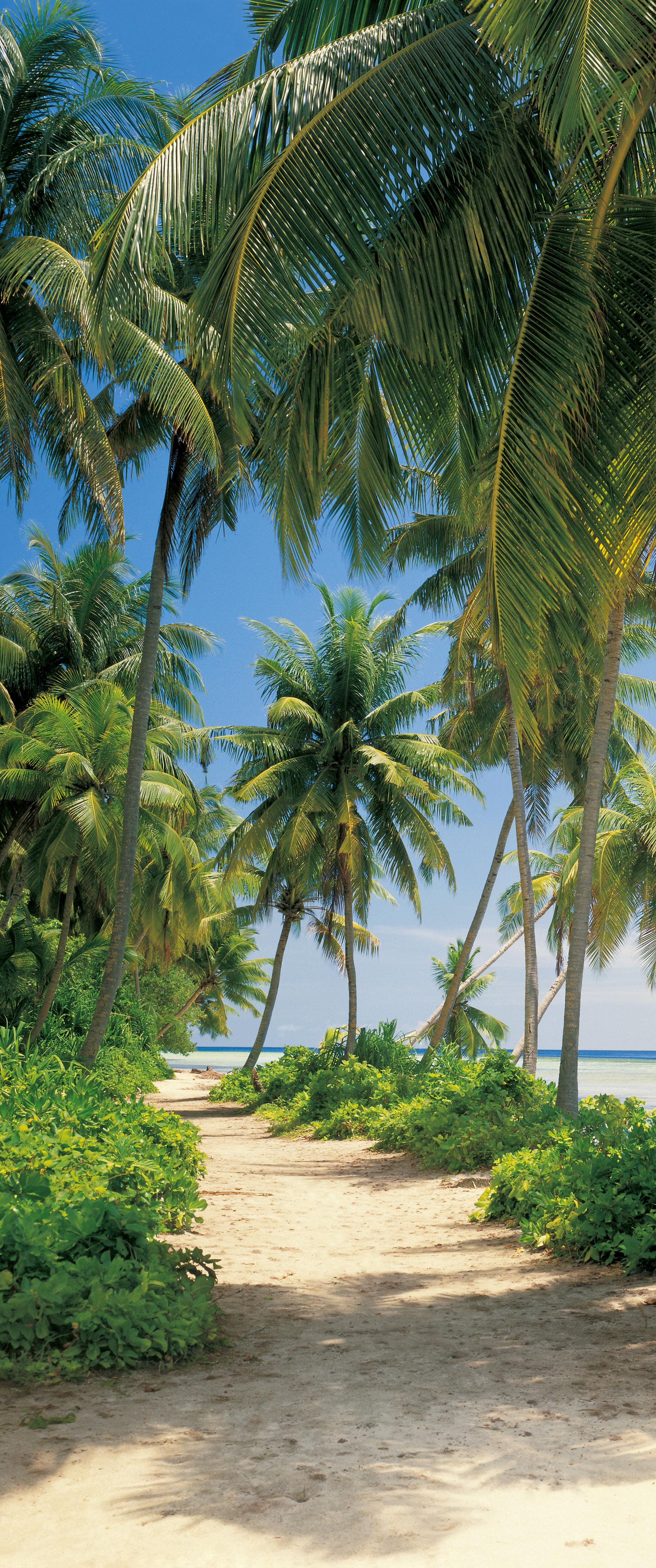 Fototapeta dvoudílná - palmy