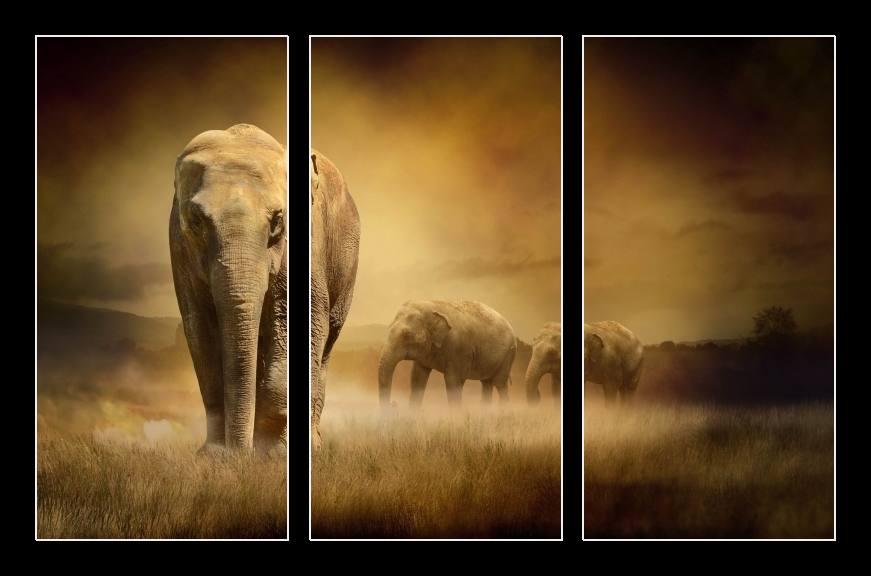 Obraz na stěnu sloni v Africe