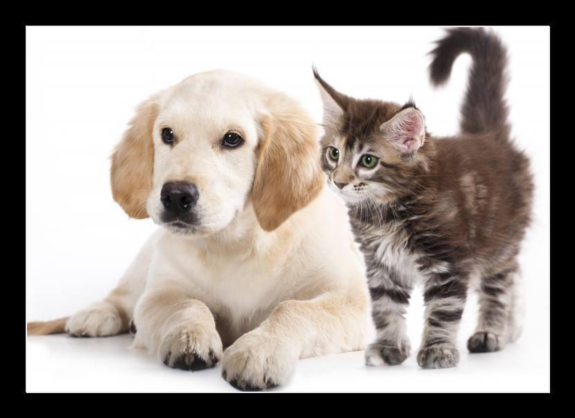 Obraz na stěnu pes a kočka