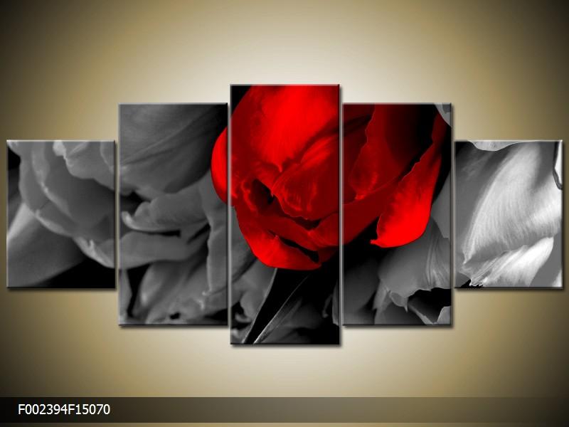 Obraz na stěnu tulipán