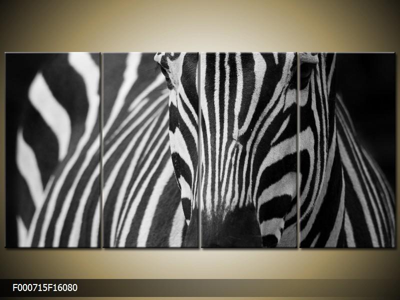 Obraz na zeď zebra