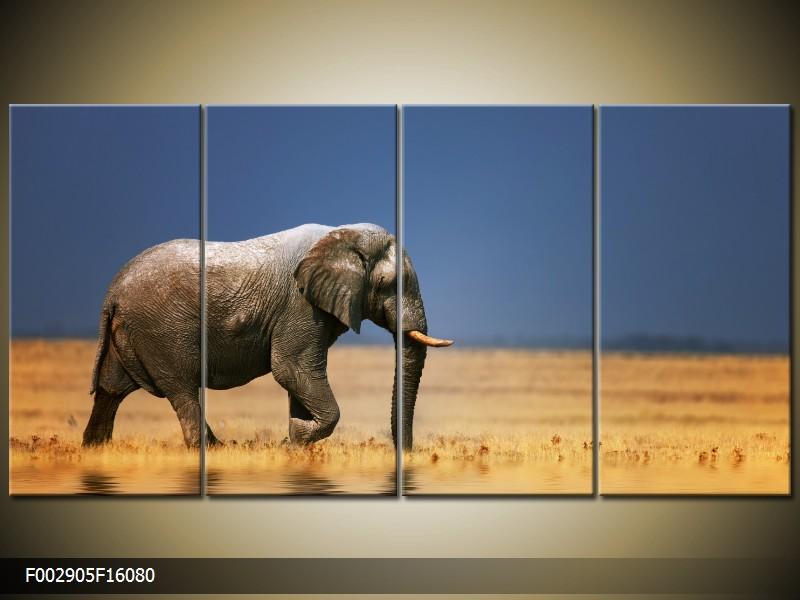 Obraz na zeď slon
