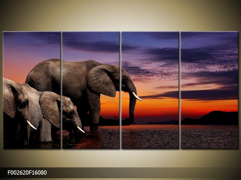 Obraz na zeď sloni