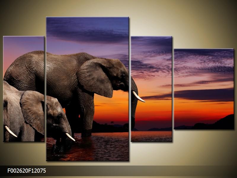 Obraz na plátně sloni