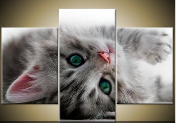 Obraz koťátka