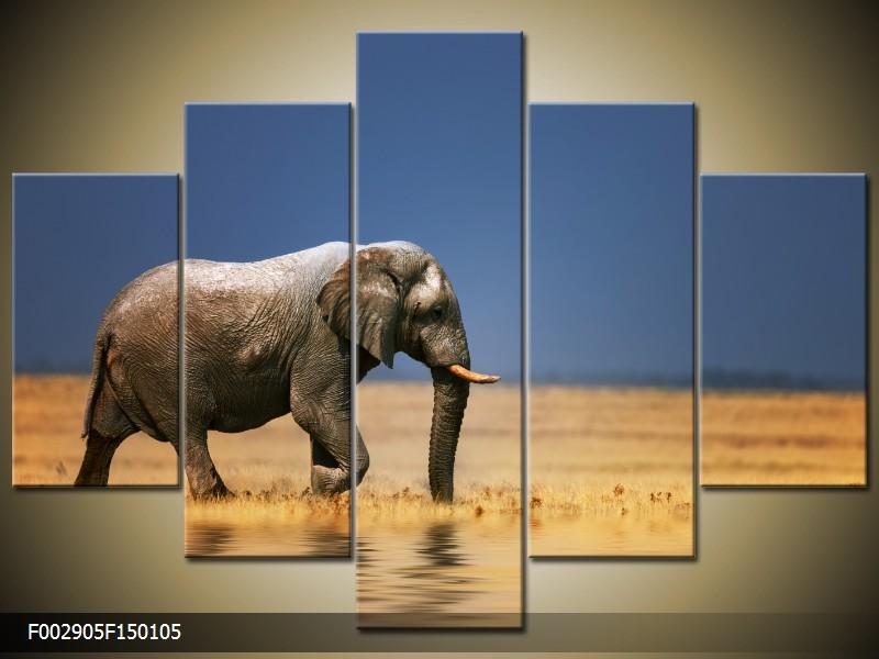 Obraz na stěnu slon