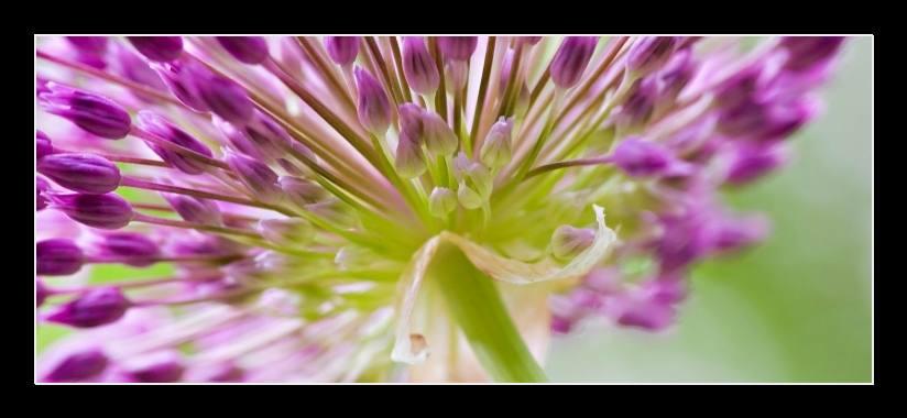 Obraz na stěnu fialový květ