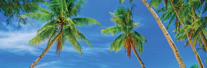 Vliesová fototapeta dvoudílná - palmy