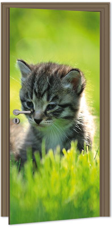 Samolepící fototapeta na dveře - kotě
