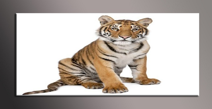 Obraz na zeď tygřík