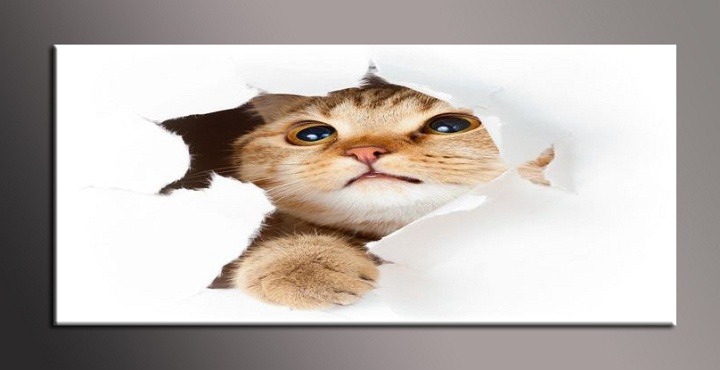 Obraz na zeď kotě