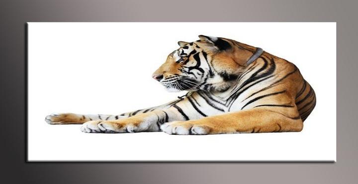 Obraz na zeď tygr