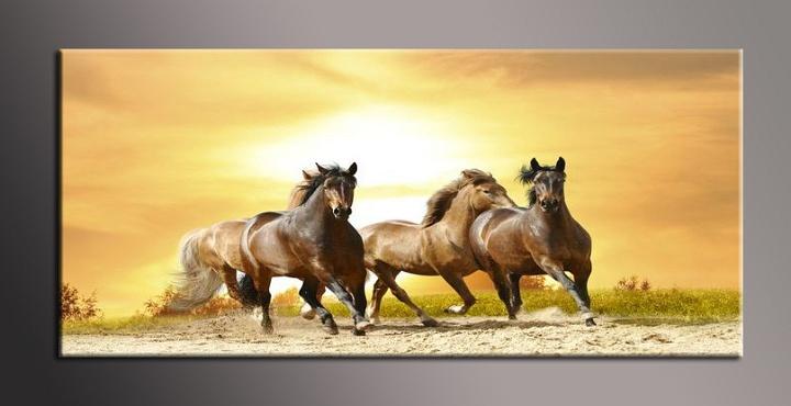Obraz na zeď koně