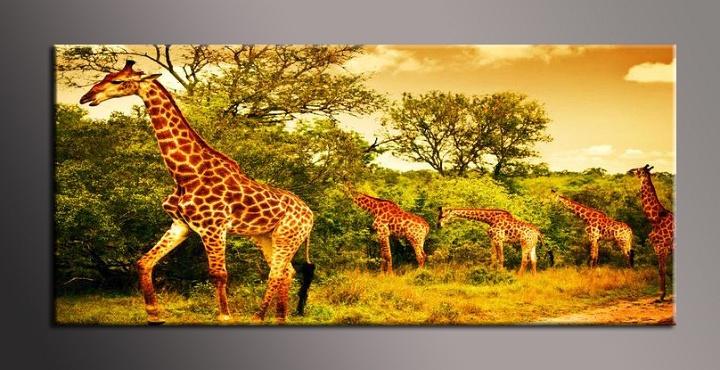 Obraz na zeď žirafy