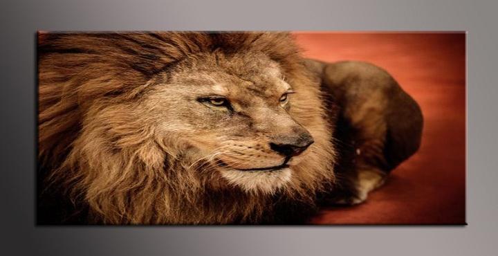 Obraz na zeď lev