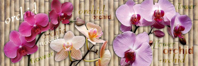 Fototapeta kuchyňská - orchidej