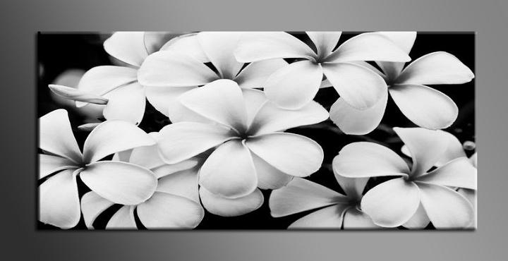 Obraz na zeď bílé květy