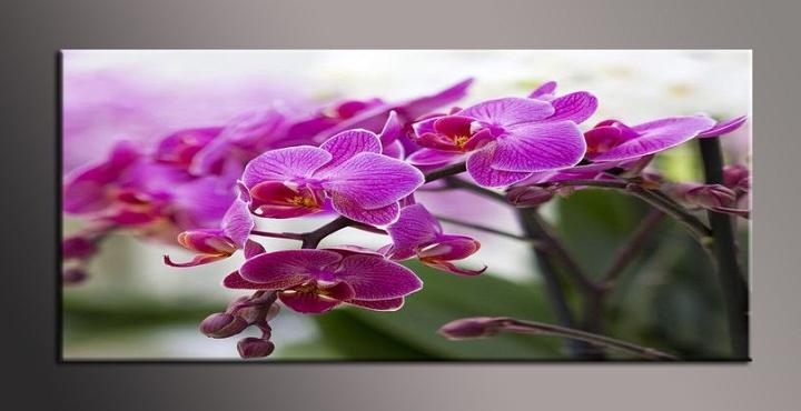 Obraz do bytu fialová orchidej