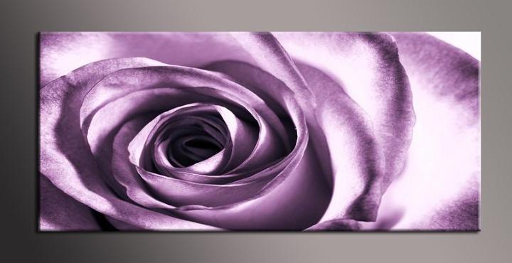 Obraz do bytu fialová růže