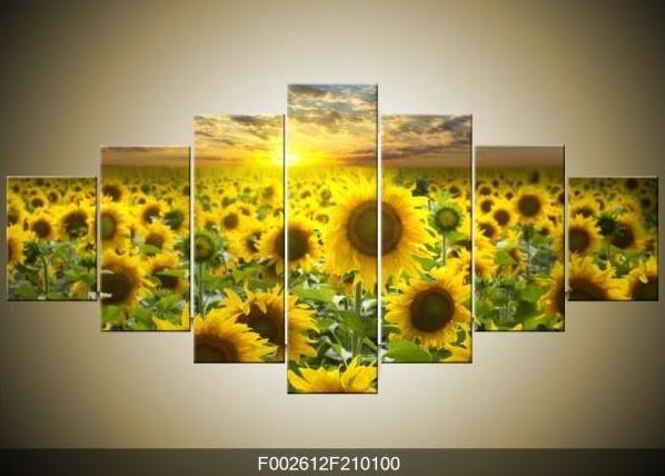 Obraz slunečnic