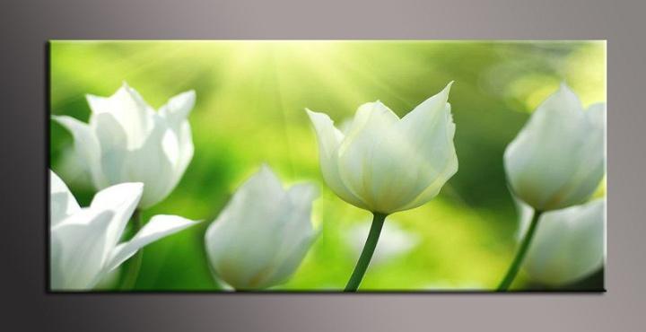 Obraz do bytu bílé tulipány