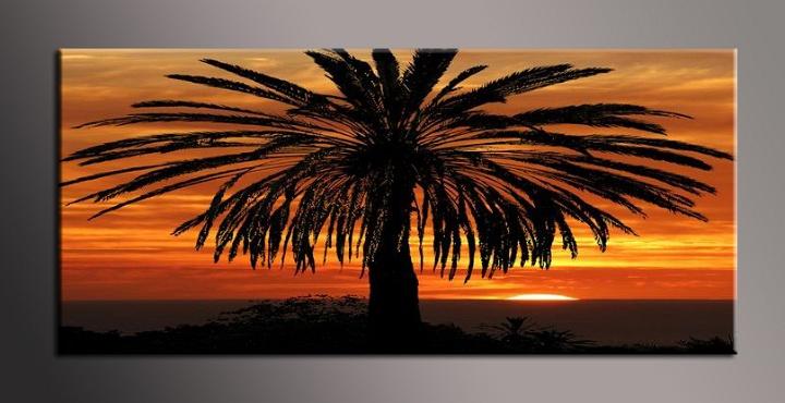 Obraz na zeď palma