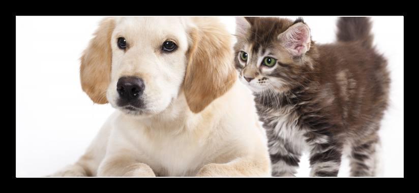 Obraz na zeď pes a kočka