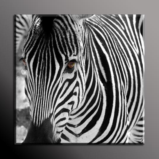 Obraz do bytu zebra