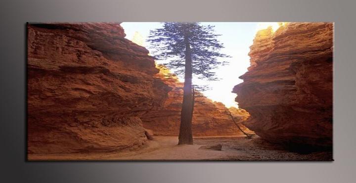 Obraz stromu ve skalách