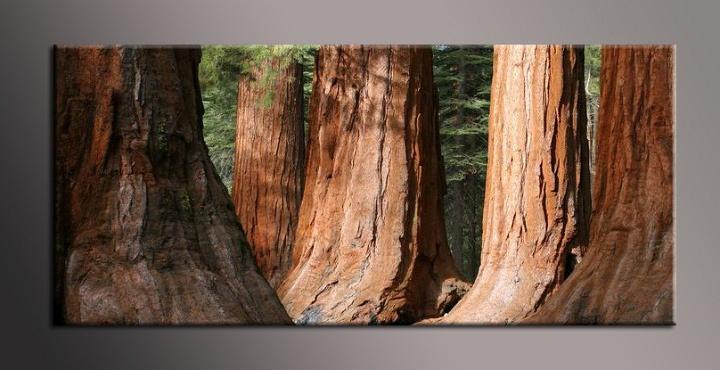 Obraz na plátně stromy