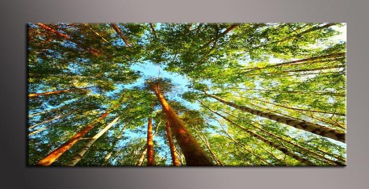 Obraz na zeď stromy