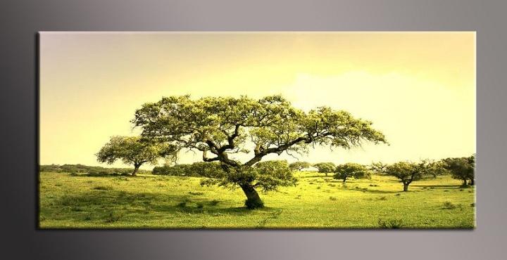 Obraz na plátně strom