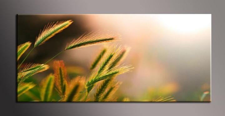 Obraz na zeď tráva