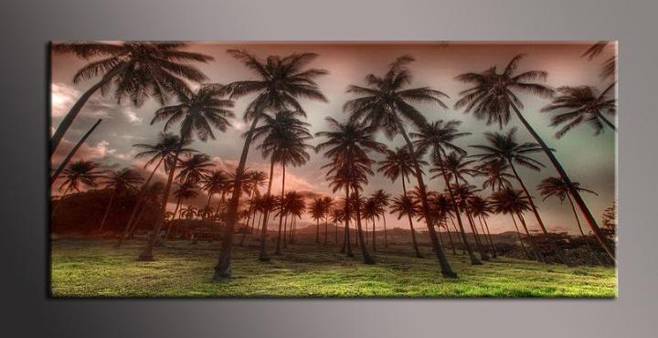 Obraz na zeď palmy