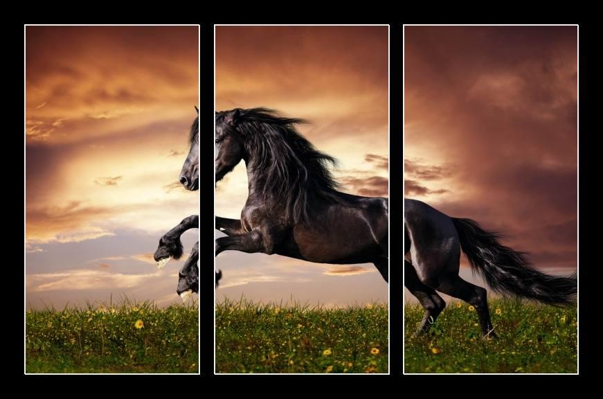 Obraz na zeď kůň