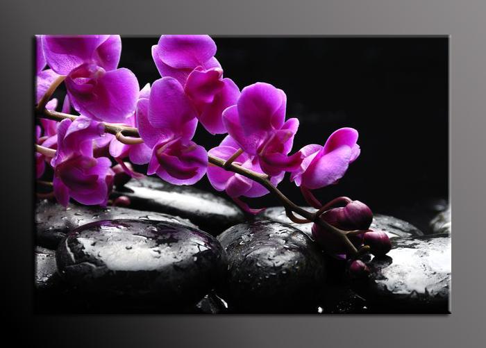 Obraz na stěnu fialová orchidej