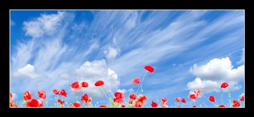 Obraz na zeď makové pole, modré nebe