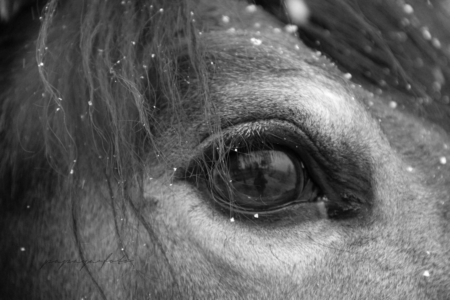 Obraz do bytu oko koně
