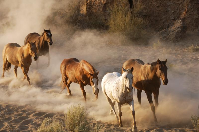 Fototapeta koně