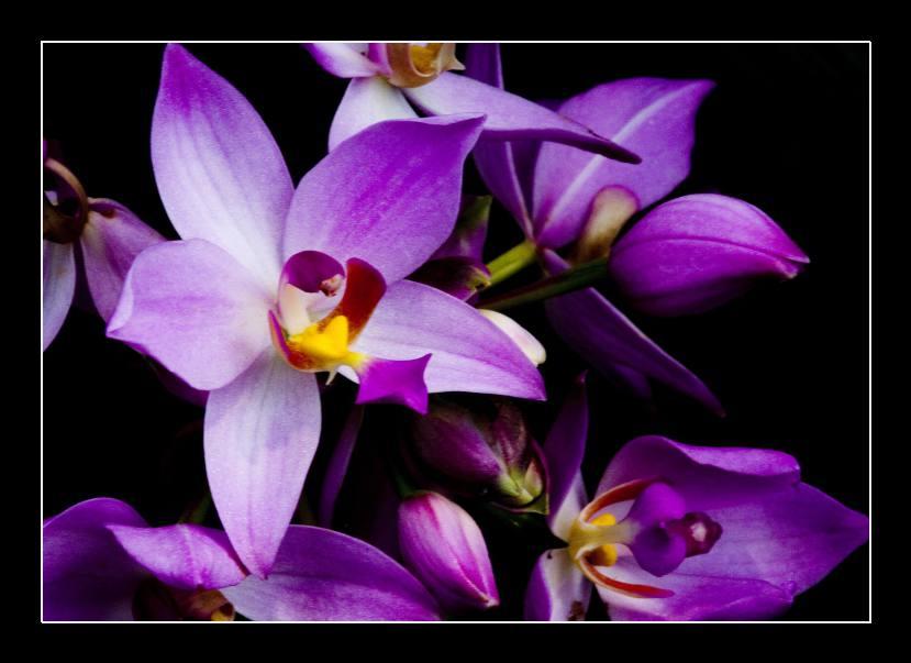 Obraz na skle orchidej