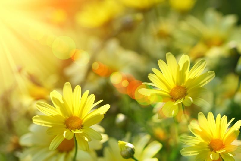 Fototapeta květiny ve slunci