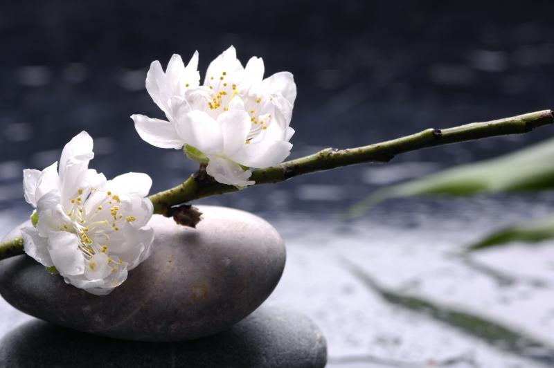 Fototapeta bílé květy
