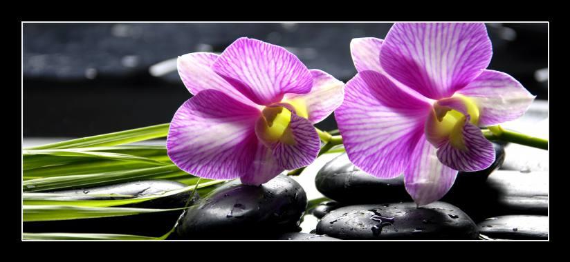 Obraz na skle kameny a orchidej