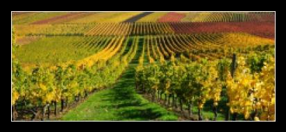 Obraz na skle vinice a slunce