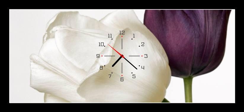 Obraz s hodinami - bílý a fialový tulipán