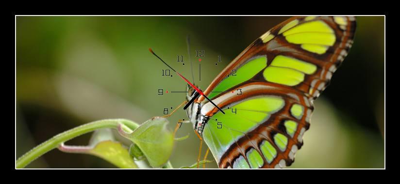 Obraz s hodinami - zelený motýl