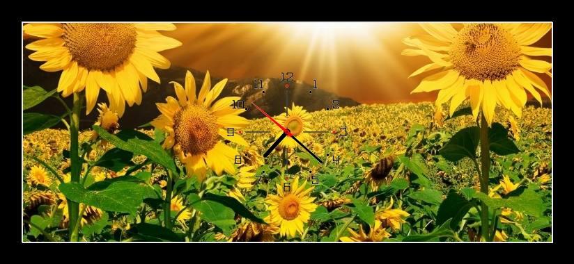 Obraz s hodinami - pole slunečnic